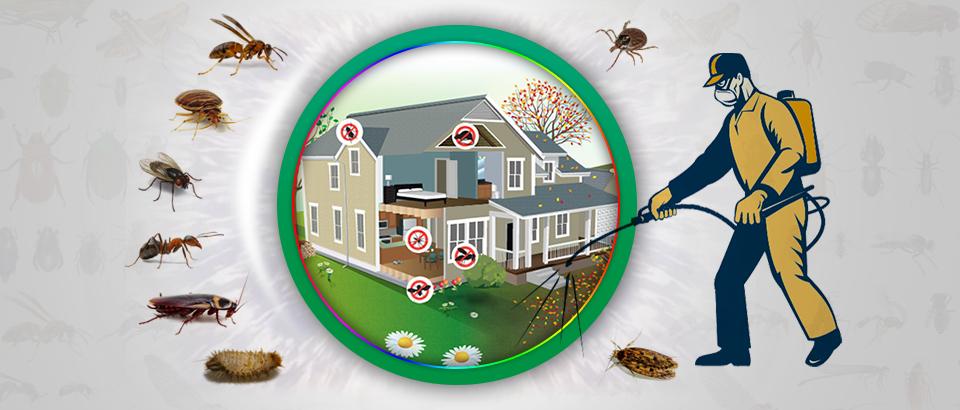 شركة مكافحة الحشرات الفجيرة