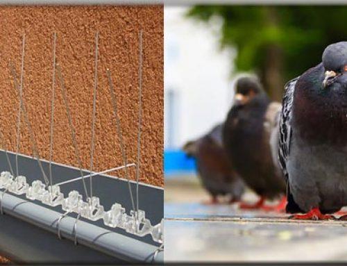 شركة مكافحة الحمام ابوظبي |0569240297|جل طارد حمام